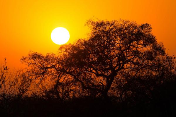 Mbombela / Krugerjev nacionalni park